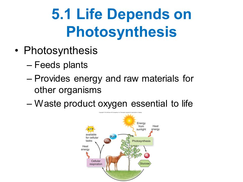 5.1 Life Depends on Photosynthesis