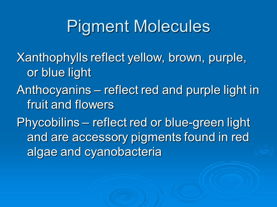 Pigment Molecules Xanthophylls reflect yellow, brown, purple, or blue light. Anthocyanins – reflect red and purple light in fruit and flowers.