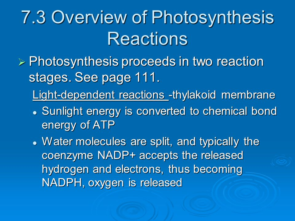 7.3 Overview of Photosynthesis Reactions
