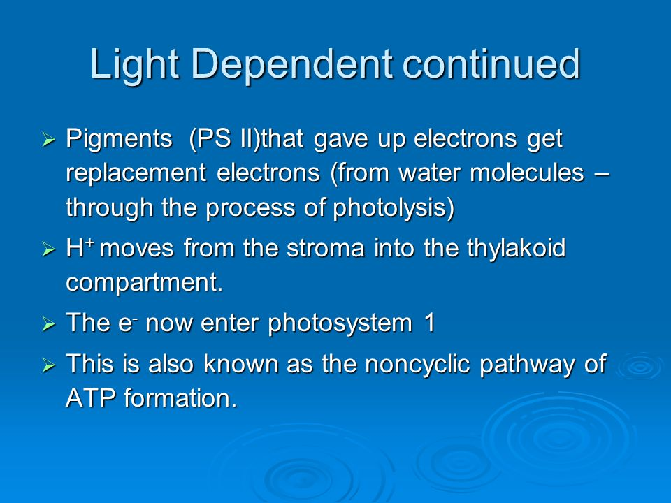 Light Dependent continued