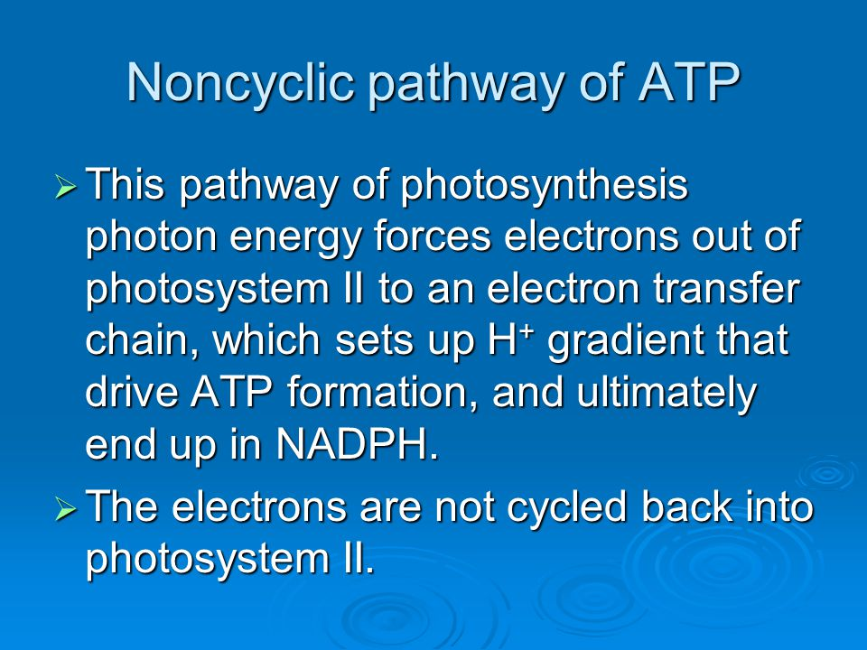 Noncyclic pathway of ATP