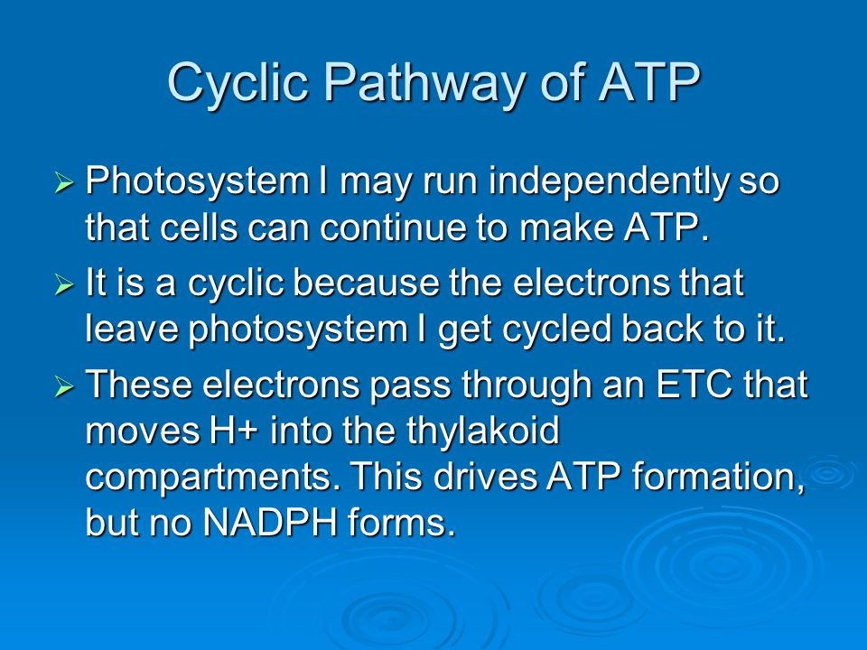 Cyclic Pathway of ATP Photosystem I may run independently so that cells can continue to make ATP.