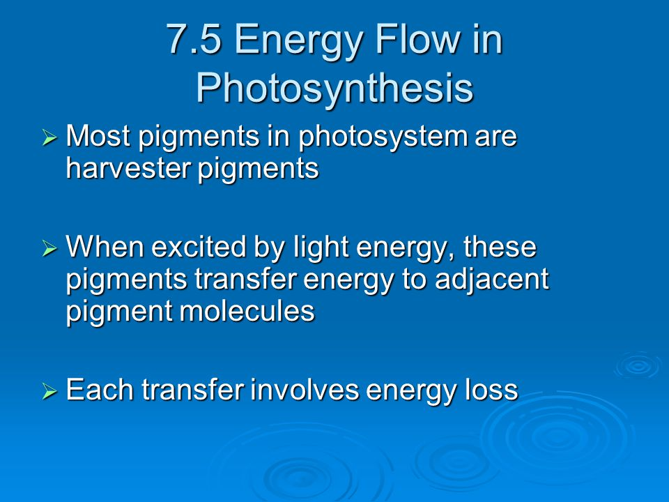 7.5 Energy Flow in Photosynthesis