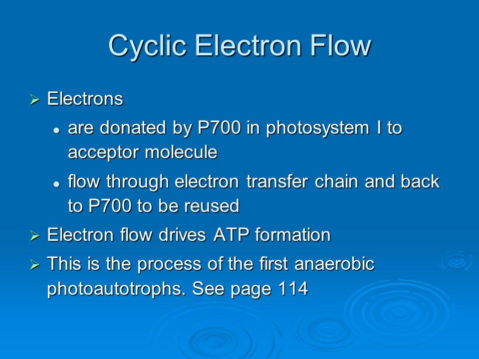 Cyclic Electron Flow Electrons