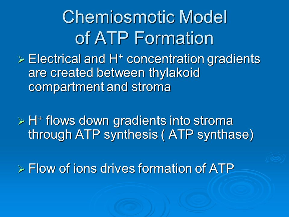 Chemiosmotic Model of ATP Formation