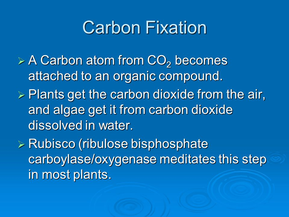 Carbon Fixation A Carbon atom from CO2 becomes attached to an organic compound.