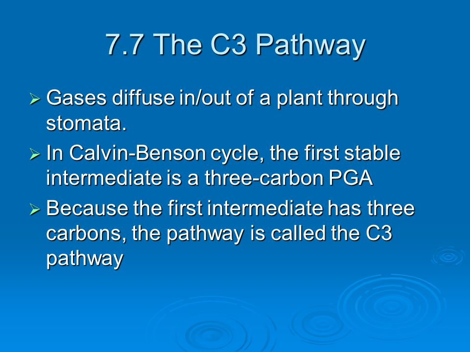 7.7 The C3 Pathway Gases diffuse in/out of a plant through stomata.