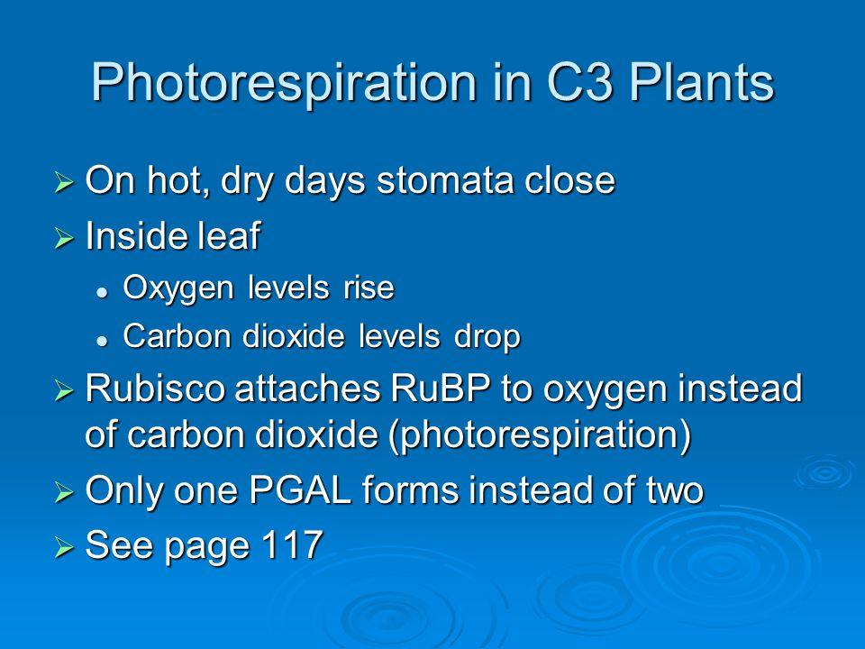 Photorespiration in C3 Plants