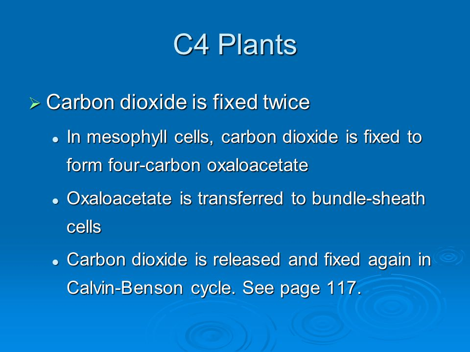 C4 Plants Carbon dioxide is fixed twice