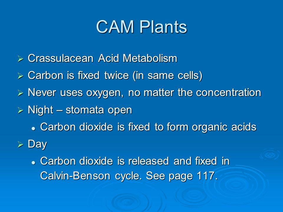 CAM Plants Crassulacean Acid Metabolism