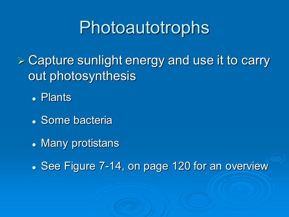 Photoautotrophs Capture sunlight energy and use it to carry out photosynthesis. Plants. Some bacteria.