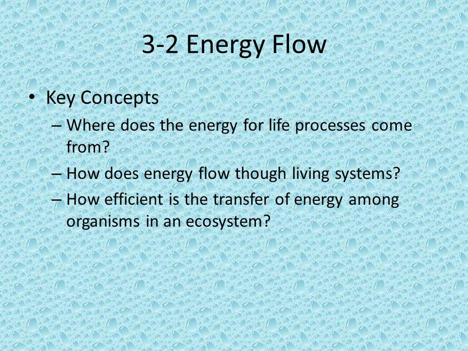 3-2 Energy Flow Key Concepts