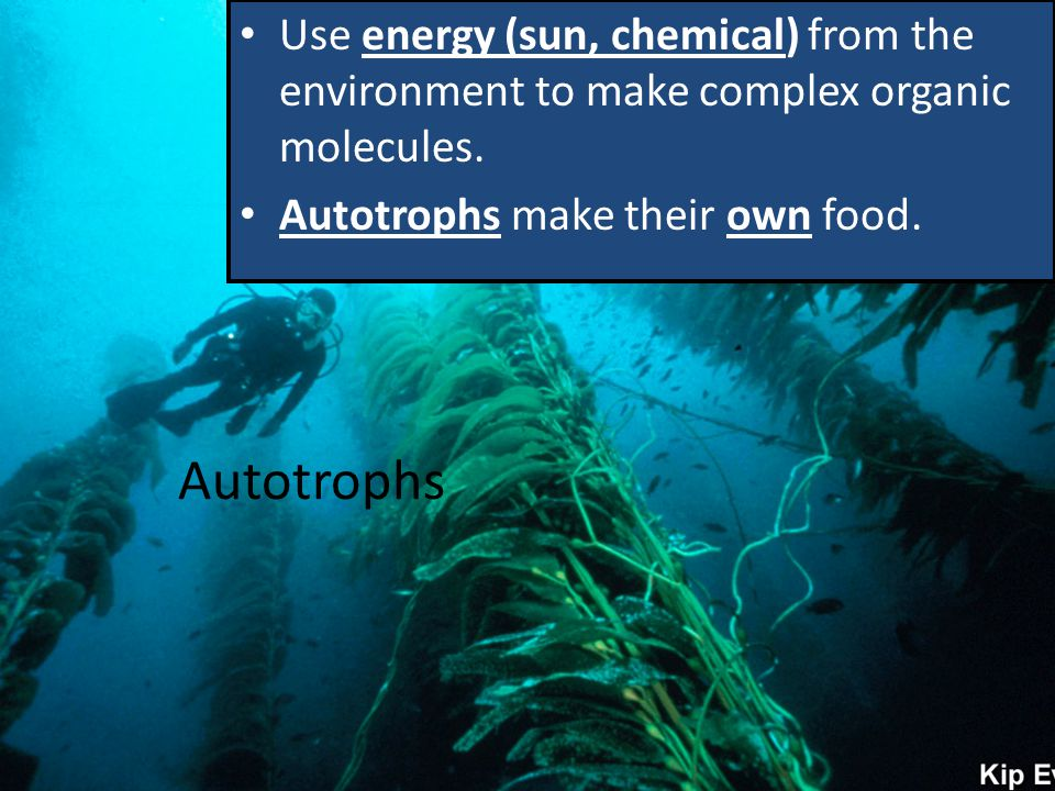 Use energy (sun, chemical) from the environment to make complex organic molecules.