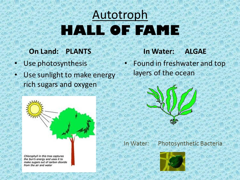 In Water: Photosynthetic Bacteria