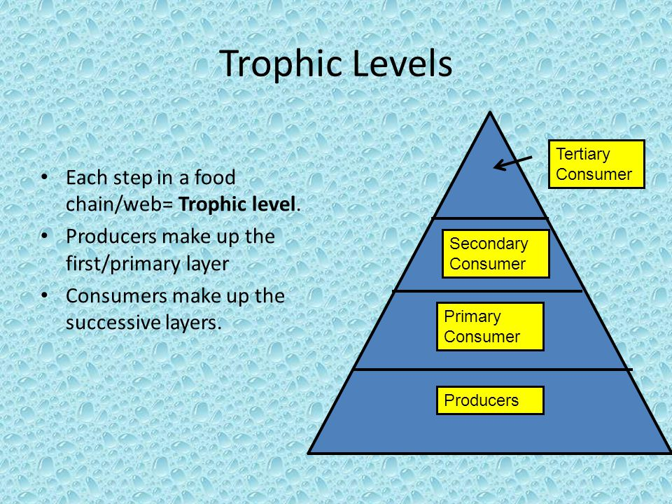 Trophic Levels Each step in a food chain/web= Trophic level.