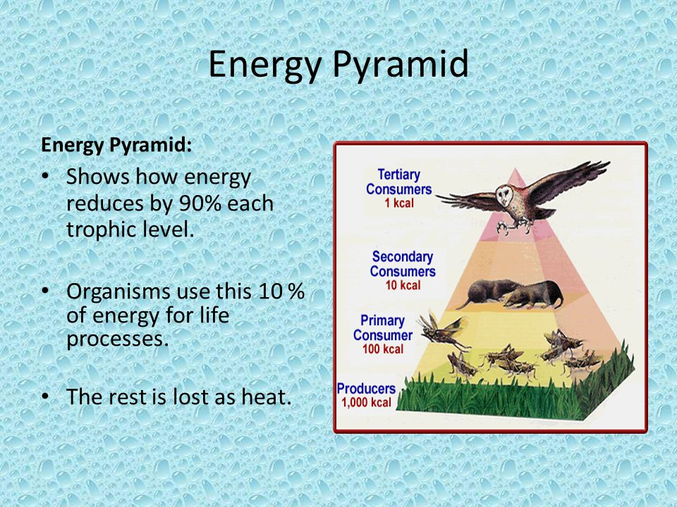 Energy Pyramid Shows how energy reduces by 90% each trophic level.