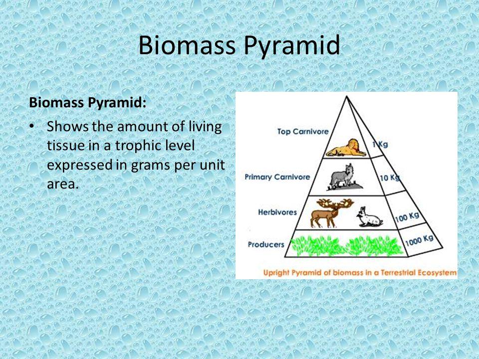Biomass Pyramid Biomass Pyramid: