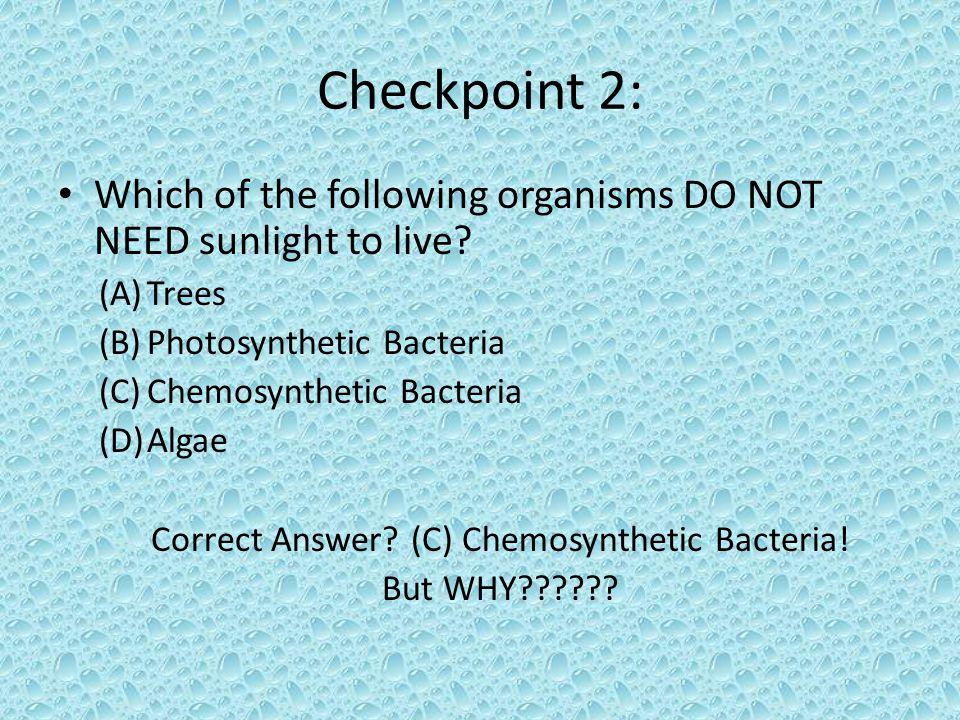 Correct Answer (C) Chemosynthetic Bacteria!