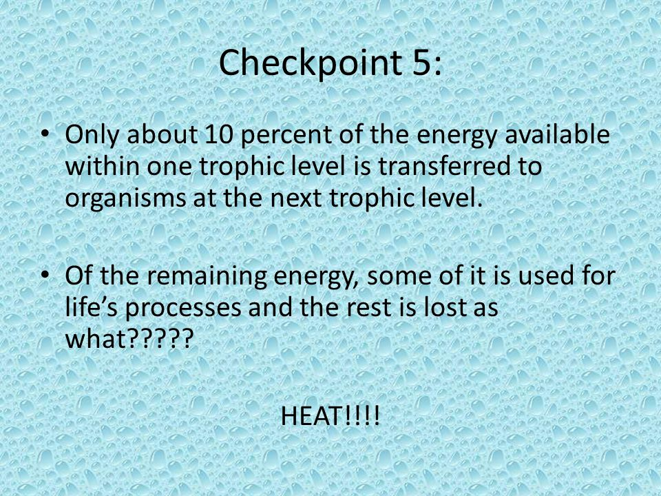 Checkpoint 5: Only about 10 percent of the energy available within one trophic level is transferred to organisms at the next trophic level.