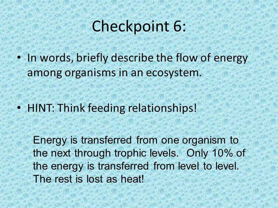Checkpoint 6: In words, briefly describe the flow of energy among organisms in an ecosystem. HINT: Think feeding relationships!