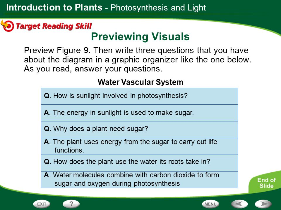 Previewing Visuals - Photosynthesis and Light