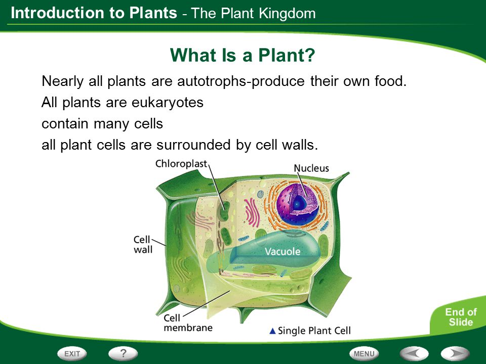What Is a Plant - The Plant Kingdom