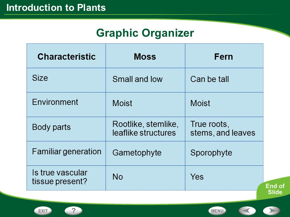 Graphic Organizer Characteristic Moss Fern Size Small and low