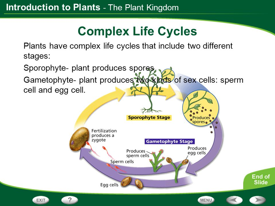 Complex Life Cycles - The Plant Kingdom