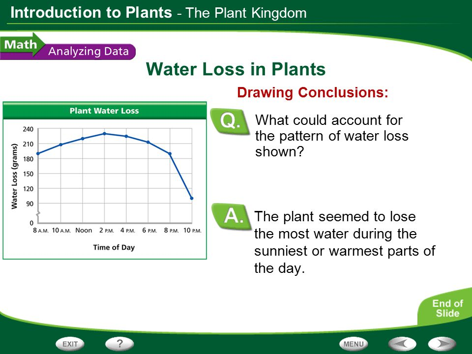 Water Loss in Plants - The Plant Kingdom Drawing Conclusions: