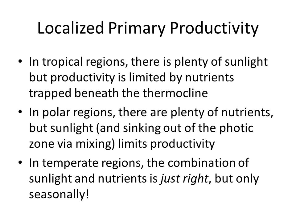 Localized Primary Productivity
