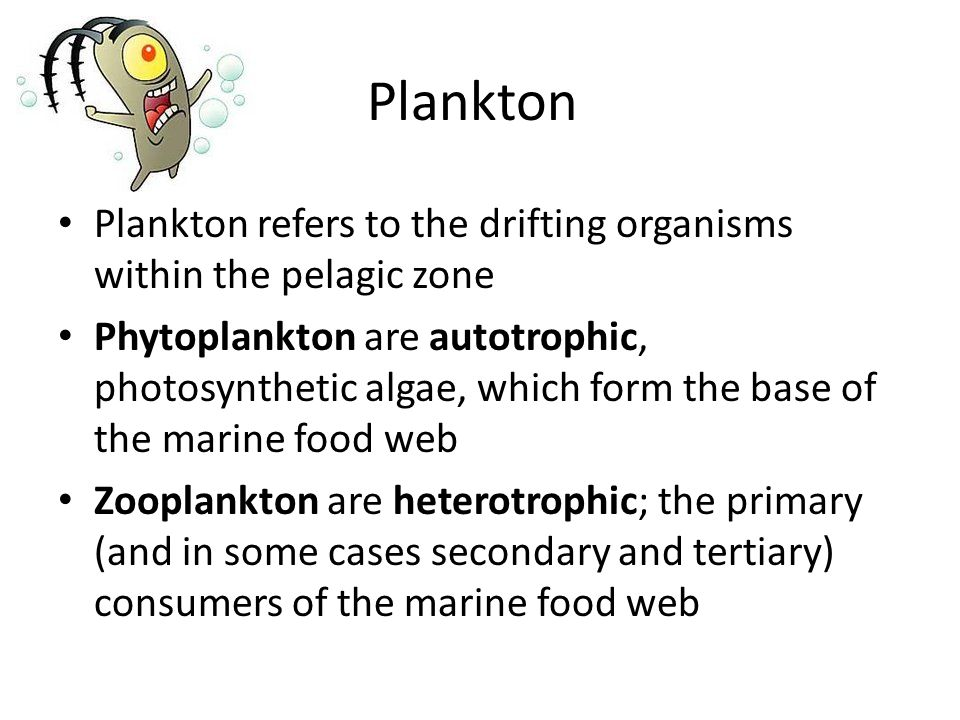 Plankton Plankton refers to the drifting organisms within the pelagic zone.