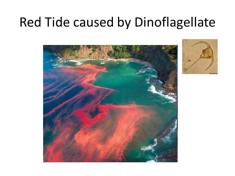 Red Tide caused by Dinoflagellate