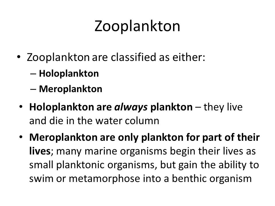 Zooplankton Zooplankton are classified as either: