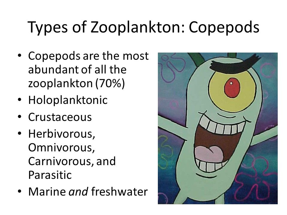 Types of Zooplankton: Copepods