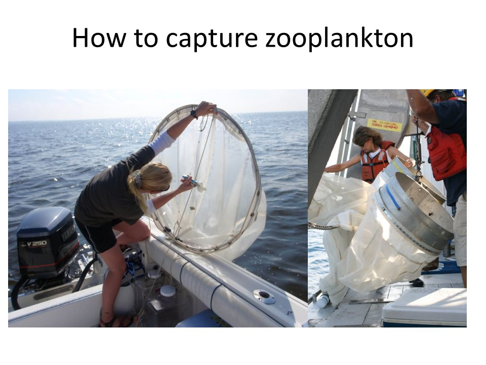 How to capture zooplankton