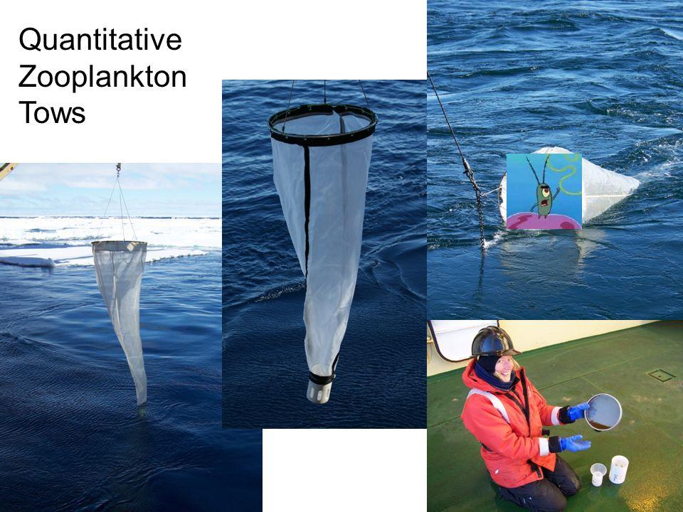 Quantitative Zooplankton Tows