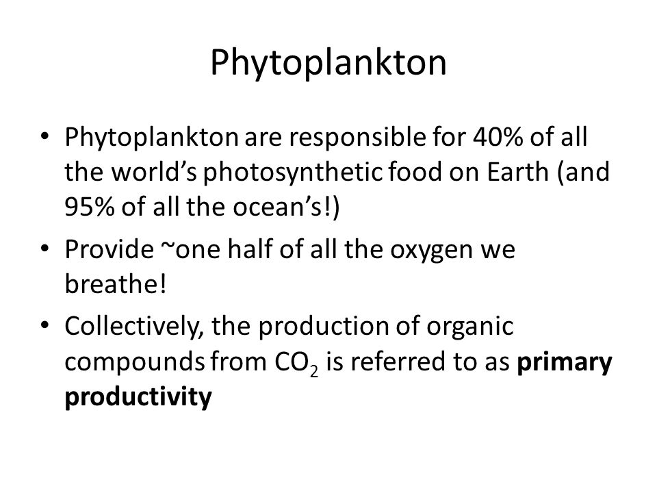 Phytoplankton Phytoplankton are responsible for 40% of all the world's photosynthetic food on Earth (and 95% of all the ocean's!)