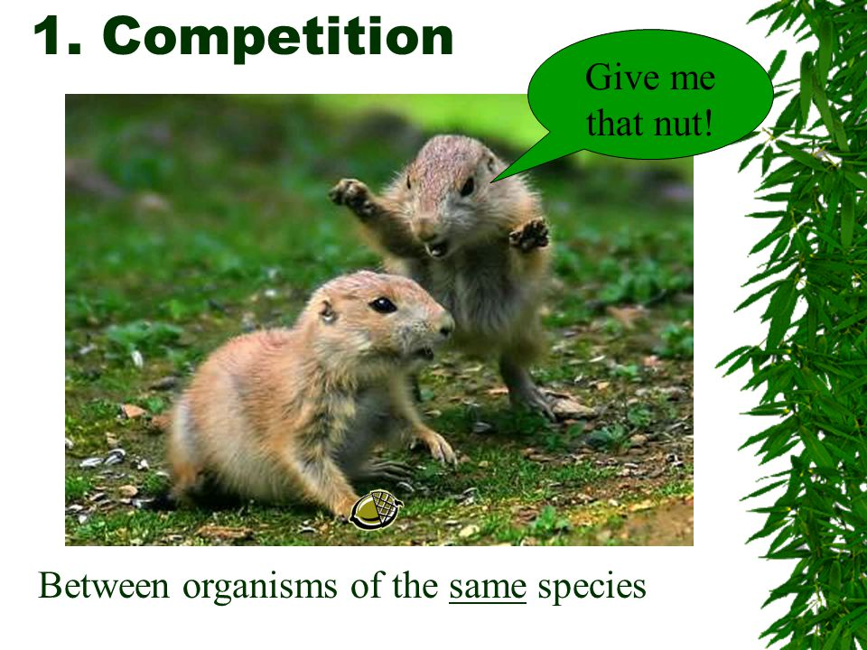 1. Competition Give me that nut! Between organisms of the same species