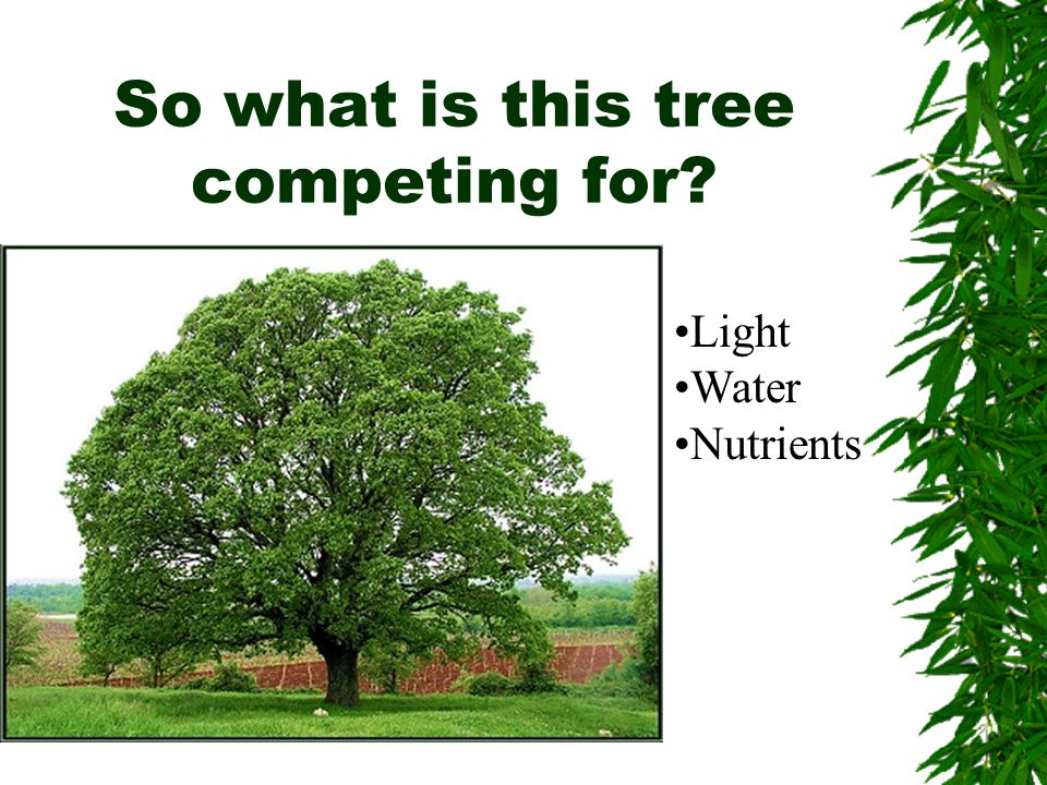 So what is this tree competing for