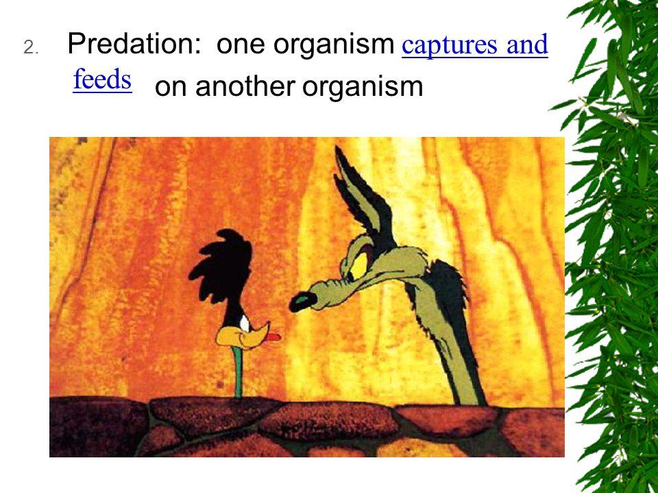 Predation: one organism