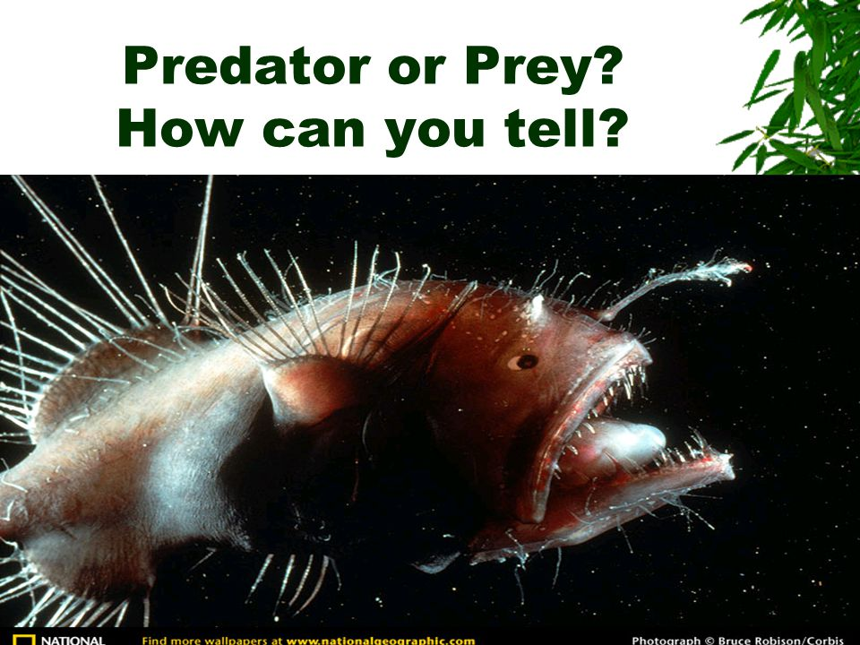 Predator or Prey How can you tell