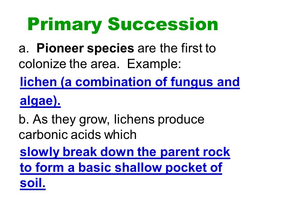 Primary Succession a. Pioneer species are the first to colonize the area. Example: b. As they grow, lichens produce carbonic acids which.