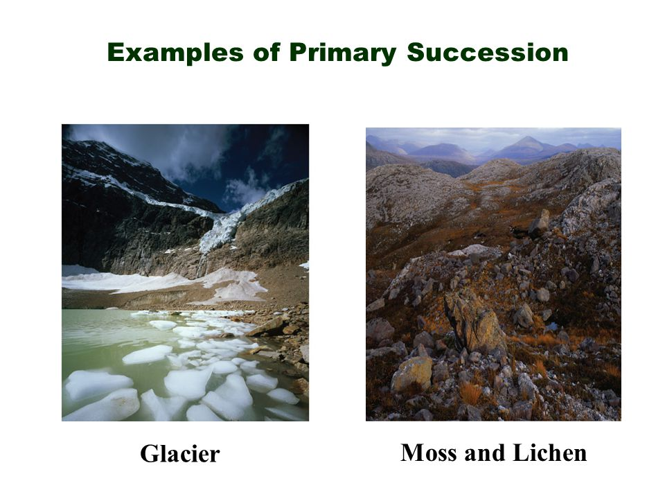 Examples of Primary Succession
