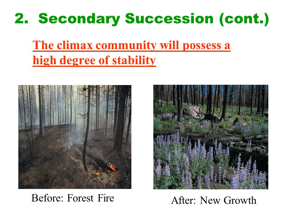 2. Secondary Succession (cont.)
