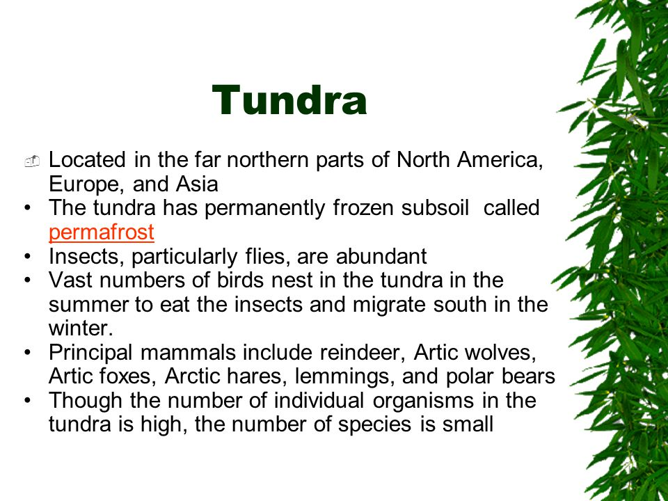 Tundra Located in the far northern parts of North America, Europe, and Asia. The tundra has permanently frozen subsoil called permafrost.