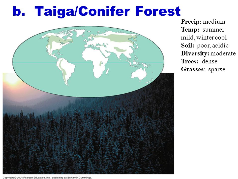 b. Taiga/Conifer Forest