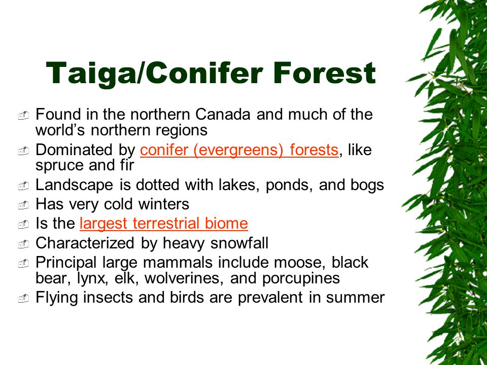 Taiga/Conifer Forest Found in the northern Canada and much of the world's northern regions.