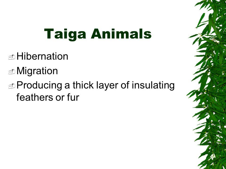 Taiga Animals Hibernation Migration