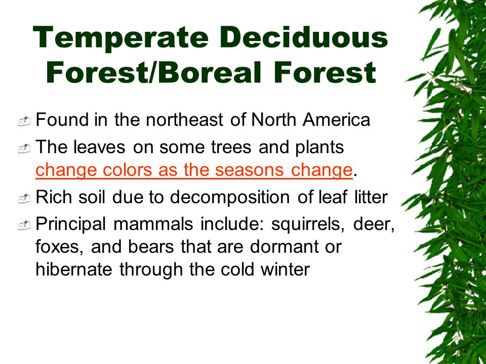 Temperate Deciduous Forest/Boreal Forest