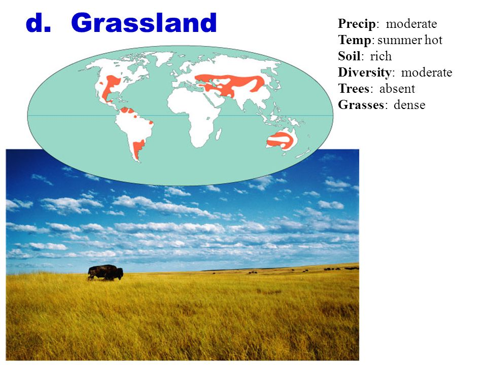 d. Grassland Precip: moderate Temp: summer hot Soil: rich